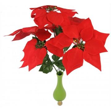 5Head Poinsettia